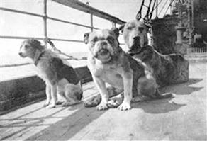 dogs on Titanic deck, including a Great Dane type