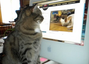 cat watching dog video on computer screen