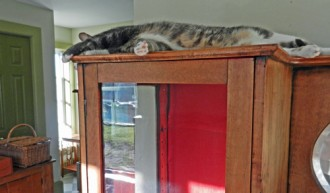 china cabinet with cat in house
