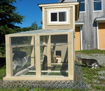 cat and dog watch chickens in run