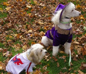 Elvis costume and poodle in purple and leopard skin outfit
