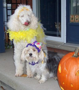 dogs dressed up on front porch