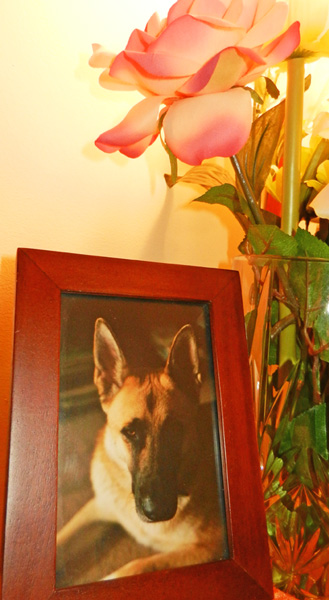 flowers-and-photo of German Shepherd Jack