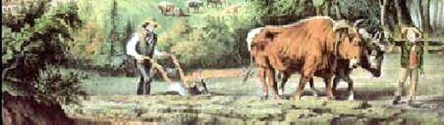 ox-in-field-hrsbstaff.ednet.ns.ca