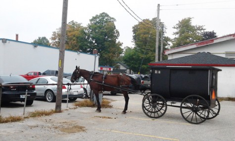 horse-and-buggy photo D Stewart