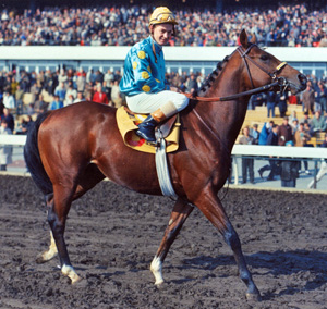 Northern Dancer photo wikicommons