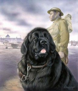 Sgt Gander by Anne Mainman njufaundlendizeljko.net:engumetnost.html - animals in war