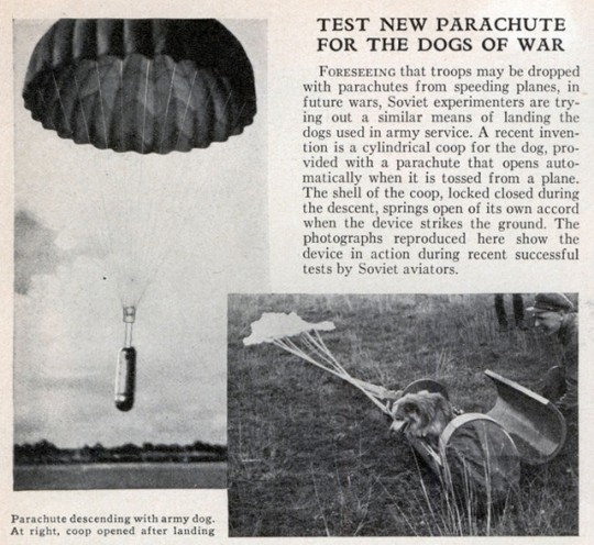 1935 article about Soviet testing of a parachute for dogs