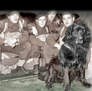 dogs in war - photo of ww2 Nfld dog Sgt Gander and men