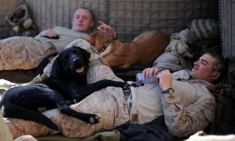 dogs and handlers relaxing