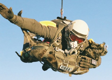 human and dog paratroopers together in harness