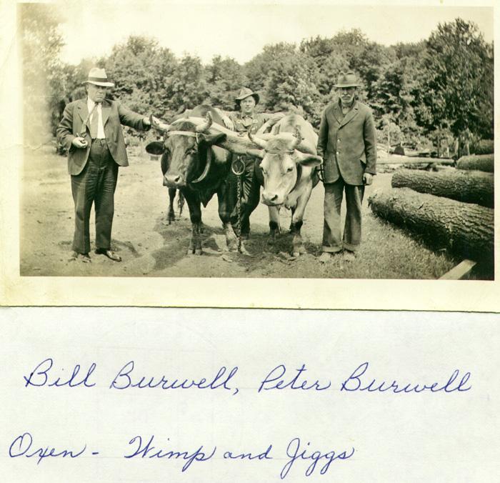 bill-peter-burwell-oxen