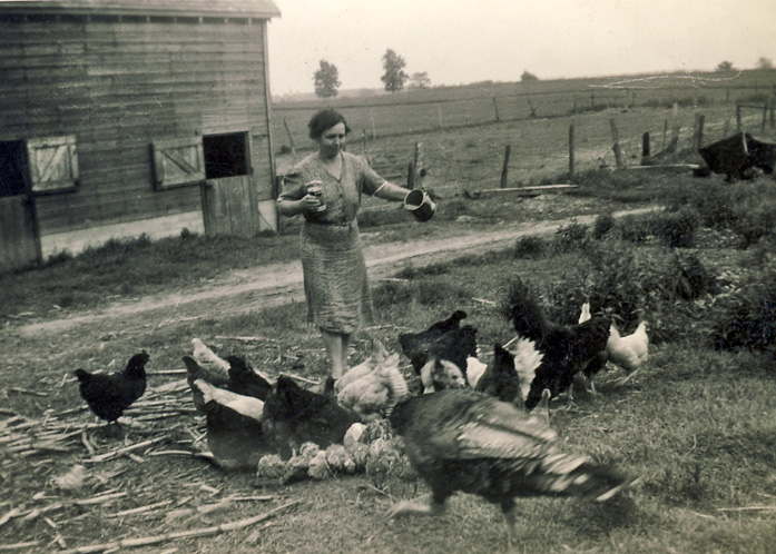 Murel Anger feeding chickens