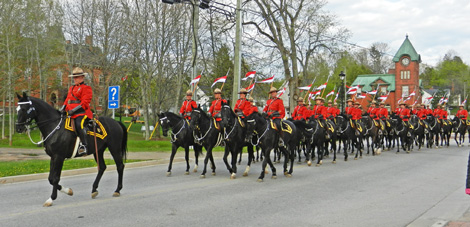 horses on the way to Musical Ride Hampton