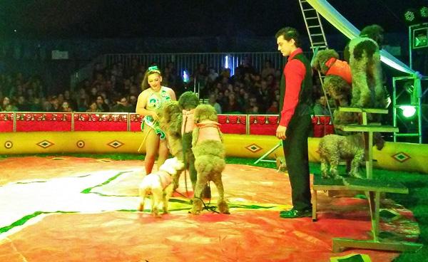 benjamin-circus-dogs-photo-d-stewart