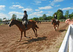 horse show class