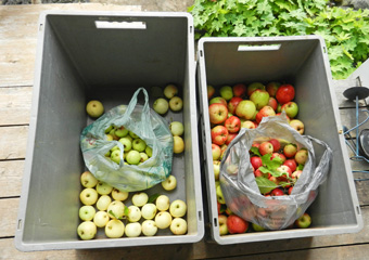 apple-bins-photo-d-stewart