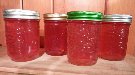 apple jelly photo d stewart