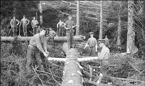 nfld-forestry-corps-scotland-wwi-heritage-nf
