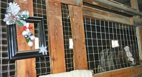 Fletcher in decorated stall photo dorothy stewart