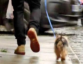 david the dog