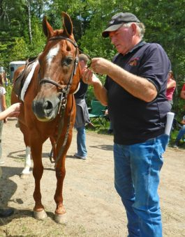 John Perkins fixing bridle on Jamie August 2016