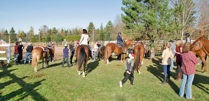 horses by ring for show at butternut stables