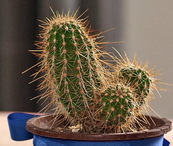 get-well-cactus