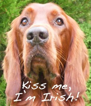 Irish_Setter-Oct-2008-Douglas_0158-Flickr-wikicommons