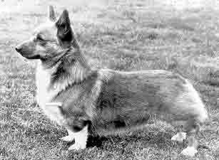 Windsor Loyal Subject welshcorgi-news.ch