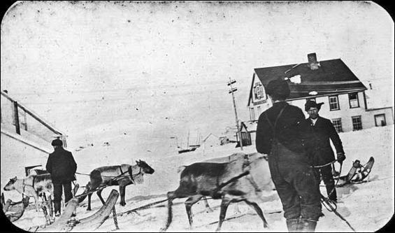 mun-maritime-history-archive-ca1907-harnessed reindeer in St. Anthony