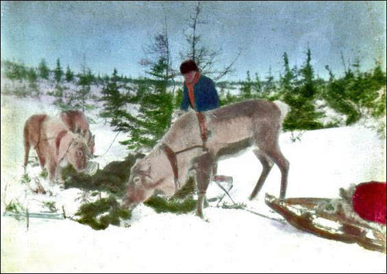 Unidentified_man_with_reindeer_during_the_winter-c-1907-Mar-Hist-Arch-mun-digital