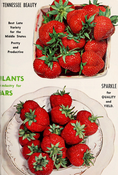 Allens-1963_book_of_berries-wikicommons