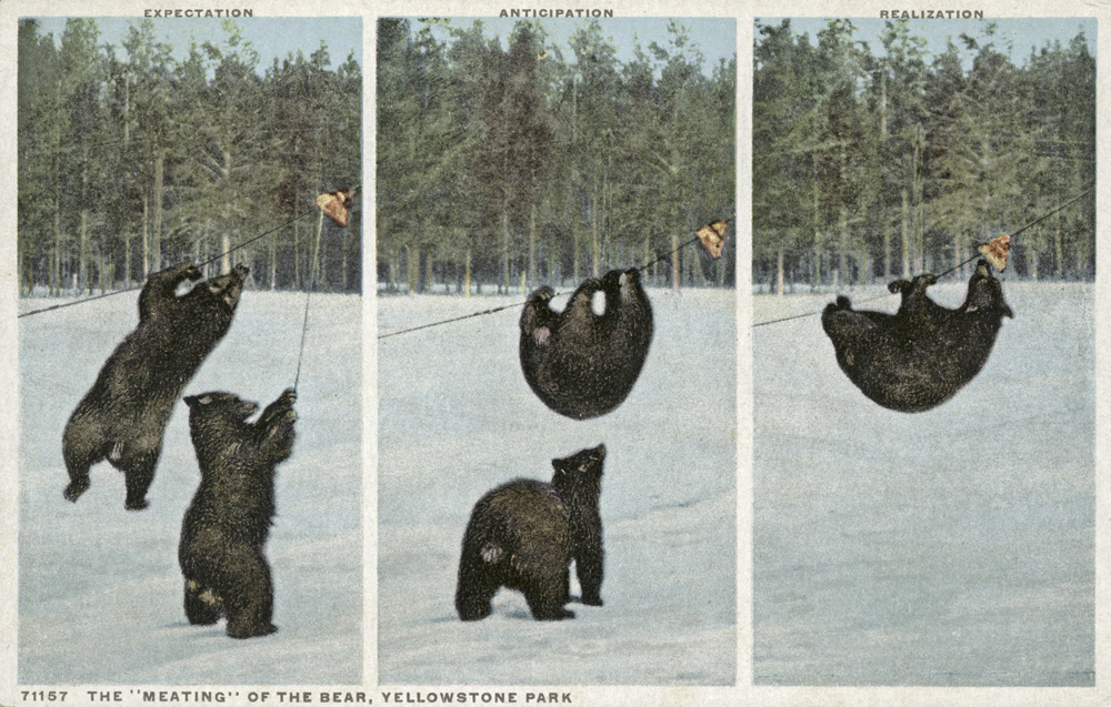 The-Meating-of_the_Bear_Yellowstone_Park_NYPL_wikicommons