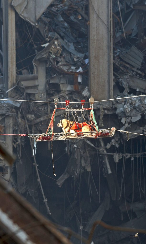Rescue_dog-15-sep-2001-Preston-Keres-US-Navy-wikicommons